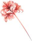 flowerphilleft